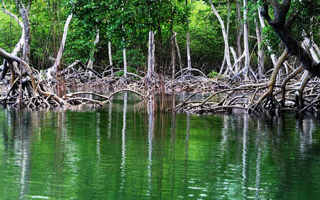 Tours to Los Haitises National Park Mangroves.